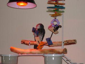 Kranker Papagei mit Wärmelampe